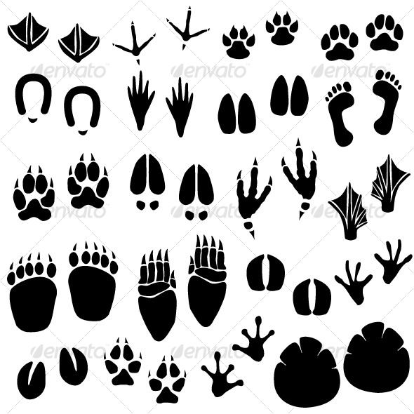 animal-footprint-track-vector