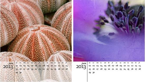 freebie 2013 calendar template